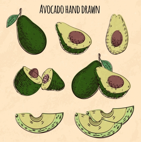 avocado icons various 3d shapes hand drawn sketch