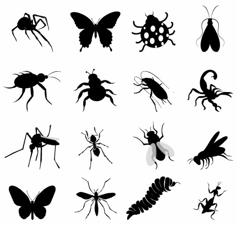 black insect set