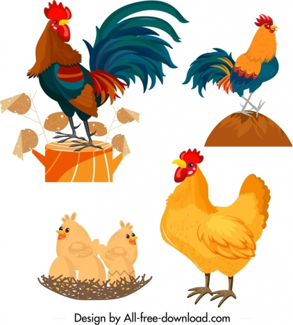 chicken icons rooster hen chick symbols cartoon design