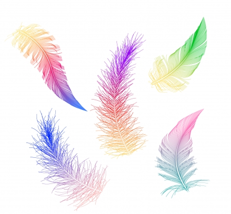 colorful feather collection