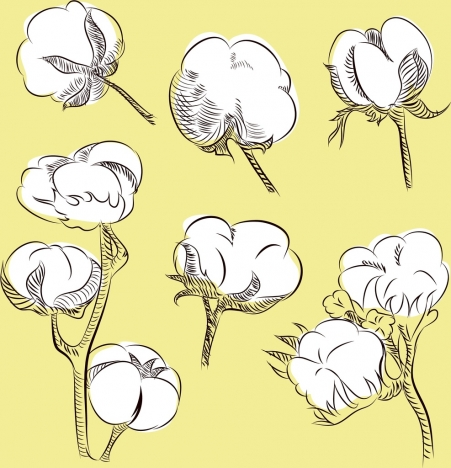 cotton flowers background hand drawn outline