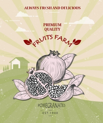 farm fruit banner pomegranate icon retro design