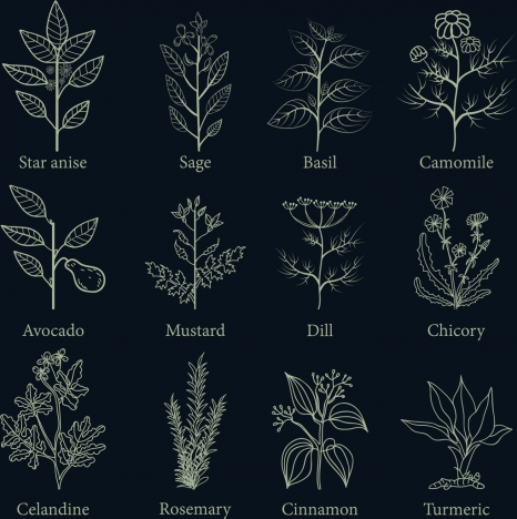 herb icons collection flat dark design various types