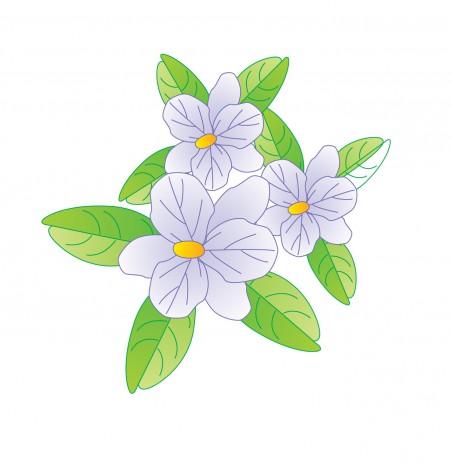 Jasmine Flower Vectors Stock In Format For Free Download 793 01kb