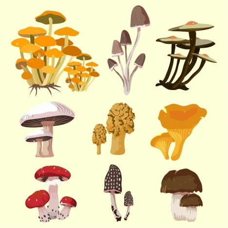 mushroom icons isolation 3d multicolored design various types