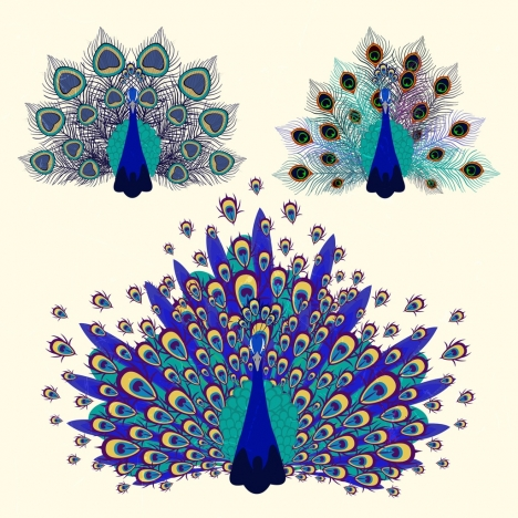 peacock icons multicolored feather decoration flat design