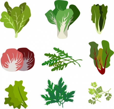 salad icons collection various types isolation