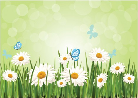 Spring Daisy Background