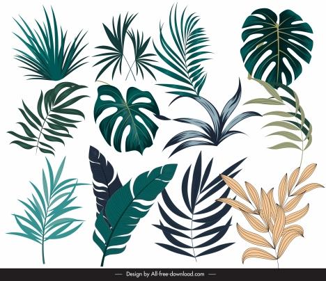 tropical leaf icons modern colored handdrawn design