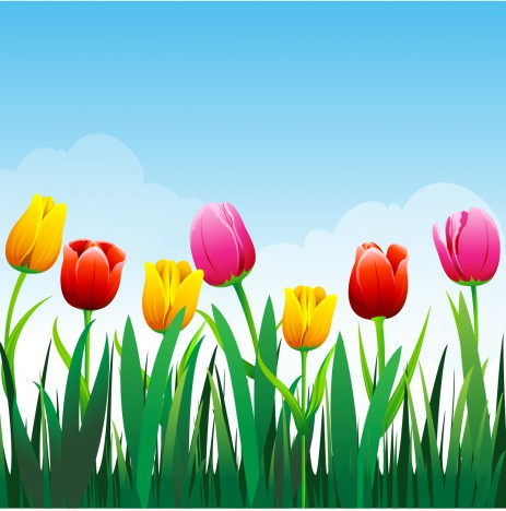 Tulip flower background