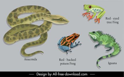 animal education design elements python frog iguana sketch