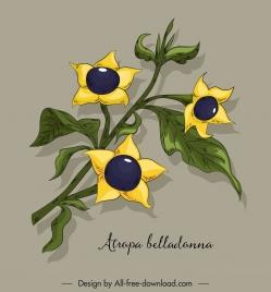 belladonna flower icon colored classical handdrawn sketch
