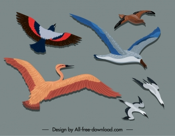 birds painting colorful flat sketch motion design