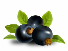 black currant fruits with green leaves