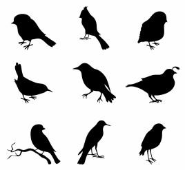 Close-up of various birds