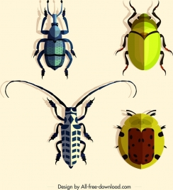 coleopterous insects icons colorful bugs design