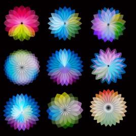 color wheel flowers
