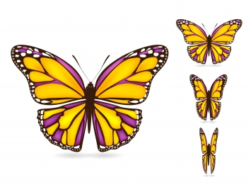 colorful butterflies set with realistic vector illustration