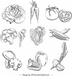 culinary ingredients icons handdrawn vegetables sketch
