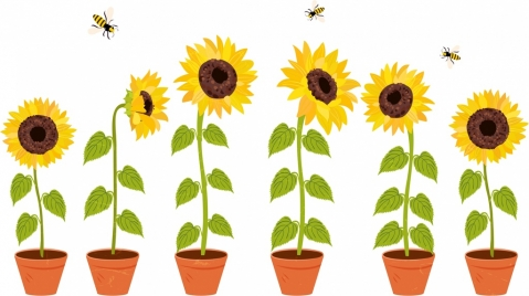 decorative flora drawing sunflower pots honeybees icons