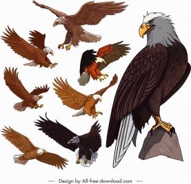 eagle icons colored cartoon sketch