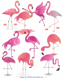 flamingo species icons colored flat sketch