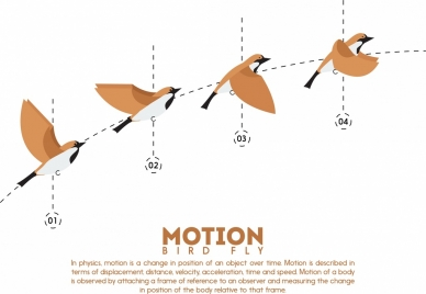 flying bird infographic motion outline