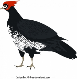 galliformes icon classical colored cartoon character sketch