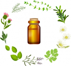 herbal icons design various plants colored sketch