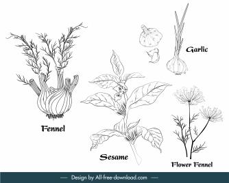 herbal ingredients icons black white handdrawn outline