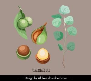 herbal plant icon tamanu fruit leaf sketch