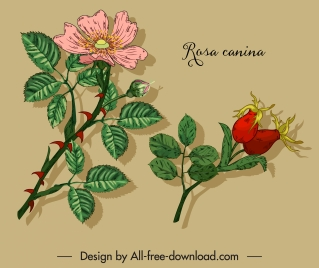 herbal plant icons floral sketch colored classic handdrawn