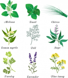 herbal plants icons multicolored design various types isolation