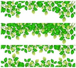 Horizontal leaf backgrounds