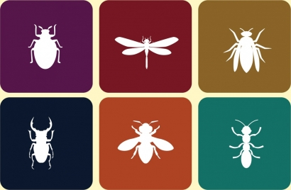 insect icons collection white flat symbols isolation