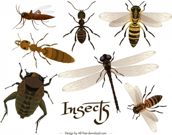 insects background ants dragonfly bee bug icons decor