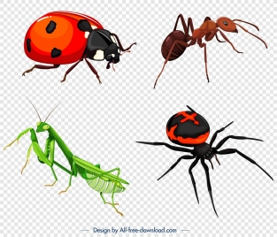 insects icons ladybug ant spider grasshopper sketch
