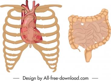internal organs icons classic flat design