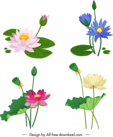 lotus flower icons colorful classical design