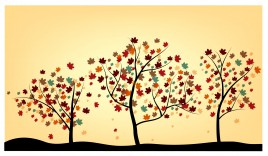 maple tree drawing