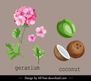 natural herb icons geranium coconut sketch