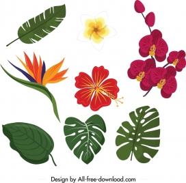 nature design elements floral leaves icons colorful design