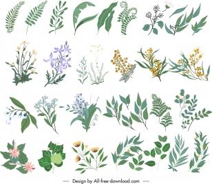 nature design elements leaf botany sketch classic handdrawn