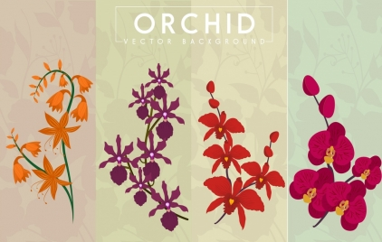 orchid background collection various shapes colored design