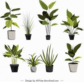 ornamental plants icons pot leaves decor