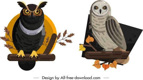 owl species icons colored classical design