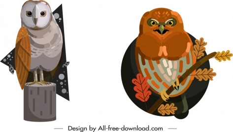 owl wild animals icons colored classical design
