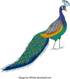 peacock painting sketch colorful elegant decor
