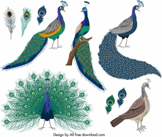 peacocks icons collection colorful feathers decor