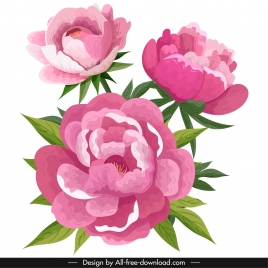 peonies flora painting colored classical sketch